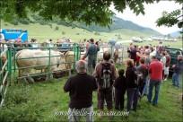 Touristes et locaux se mèlent pour admirer le spectacle