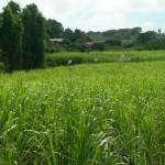 rhum-bielle-3